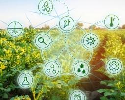 Brasil possui mais de 300 startups com soluções para o setor de agropecuária